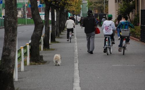 犬が1人で、いや、一匹で散歩していました。<br />飼い主はいないのか?