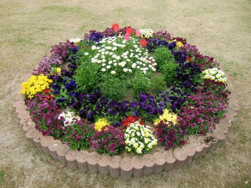 本館から散歩しながらアネックス棟に向かう。途中、花壇(写真)が造ってあり、春の花が沢山植えられている。花が好きな妻はその都度立ち止まって鑑賞する。