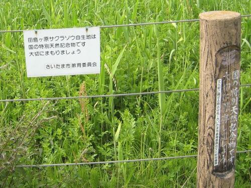 看板はあるが雑草ばかりに見える
