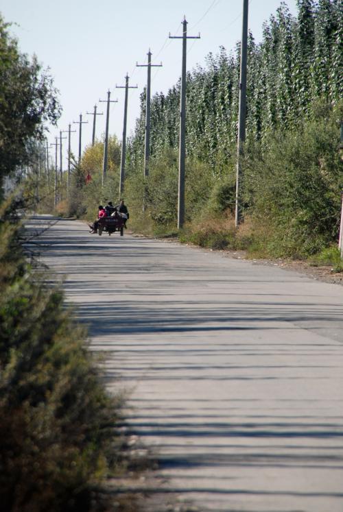 農道ほどの細い道、その陽樹林の向こうでは、、、