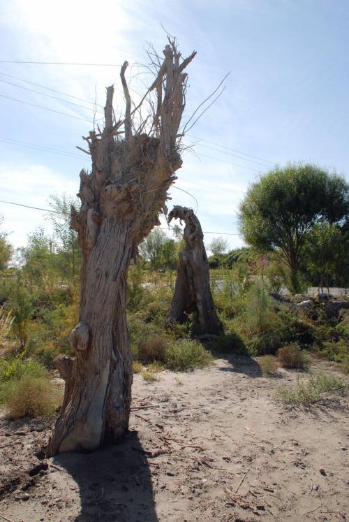 ホテル入り口付近にあった柳の枯れ木。<br /><br />