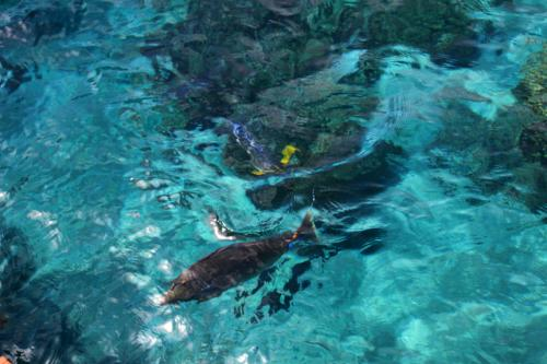 海中の色とりどりの魚 海の色が美しい