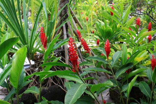 熱帯特有の美しい花