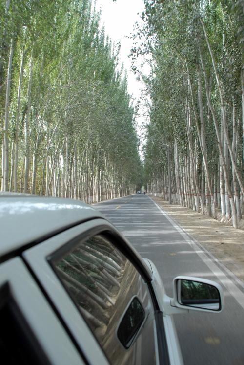 真っ直ぐ延びた陽樹並木の道をずんずん進みます。