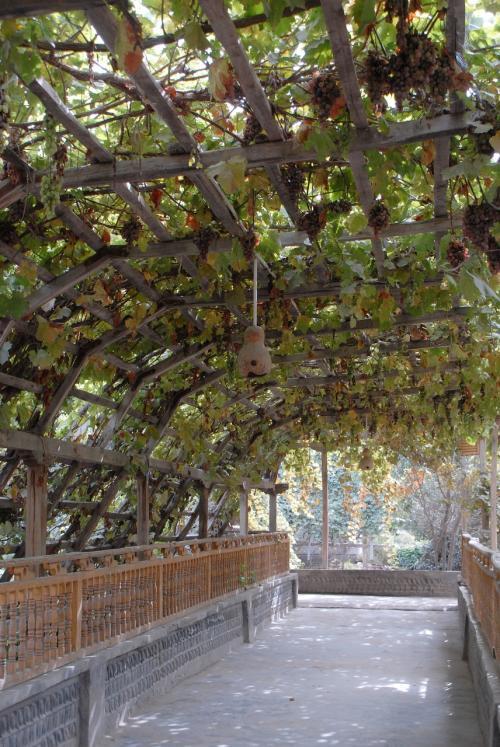 ん?<br />葡萄棚トンネルの向こうに、ワサワサした葉っぱの木が見えてきました。