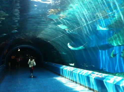 水槽のトンネル。<br />自然光を取り入れていて素敵。