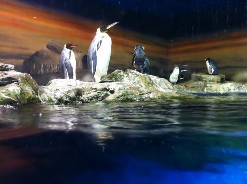 ペンギンもいた〜