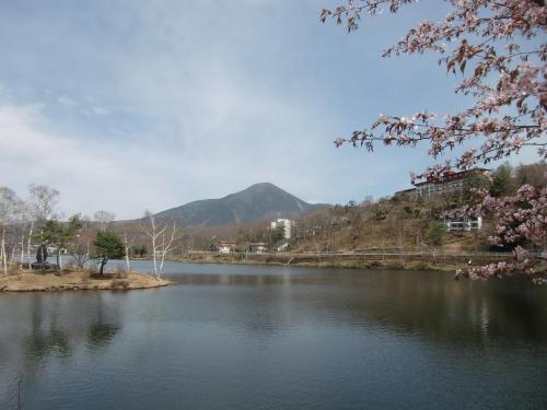 土日高速代金1000円はありがたい。今回は5月15日の日曜日チェックイン、21日の土曜日チェックアウトの6連泊である。白樺湖(写真)の山桜がまだ咲いている。今年は春の訪れが遅い。