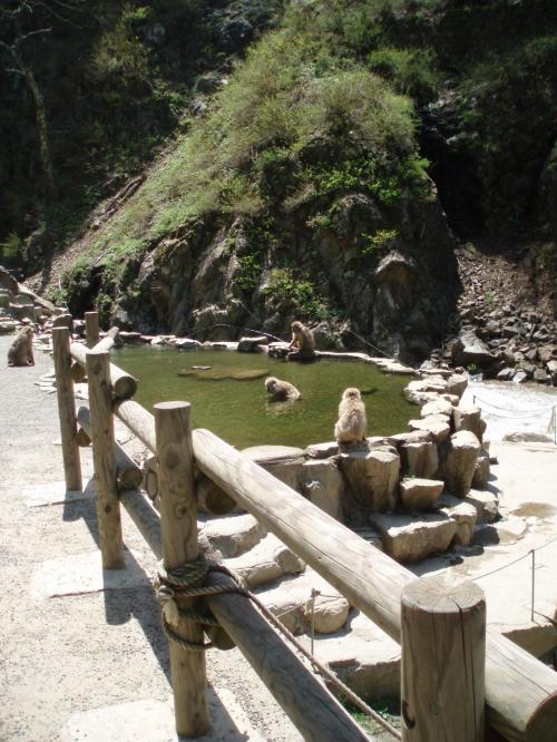 お猿さん専用の温泉。<br />