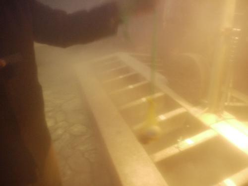 ほどよい頃合を見計らって、卵を引き上げた。卵はちゃんと茹で上がっていた。恐るべし、湯村温泉。