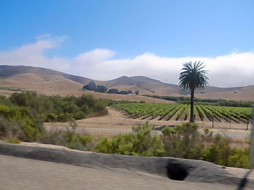 禿山のような手前が野菜畑でしょうか?緑できれいでした。