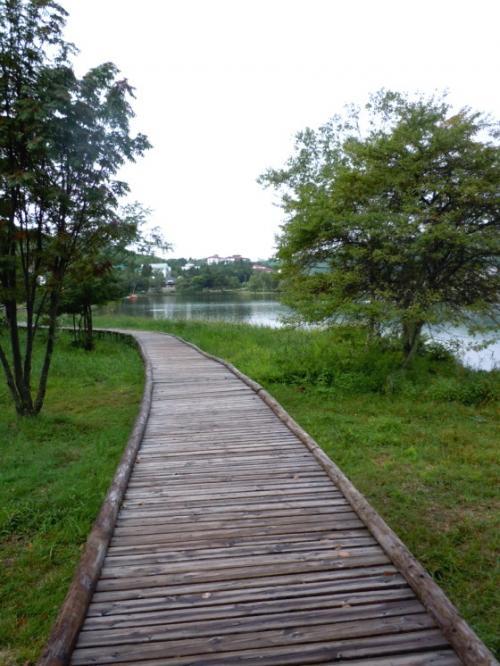 桟橋のような木製の歩道を歩いて、眺める朝の湖畔は気持ちいいです。