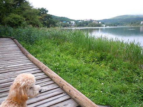 翌朝、雨がやんだので、犬を連れて白樺湖のほとりを散策。<br /><br /> 「池の平ホテル」には犬用の宿泊施設(有料:3,000円)はありますが、お世話は宿泊客自らが行うので、犬の部屋(「ジョンの部屋」だそうです)専属スタッフはいません。<br /> 特にこの日は宿泊するお犬様がうちの犬だけだったので、ぽつんと犬部屋に残されたわが犬は、きゅんきゅん鳴いて、半狂乱になっていました。<br /> どんなところでも一人ぼっちOKなワンコじゃないとちょっと辛いかもしれません。