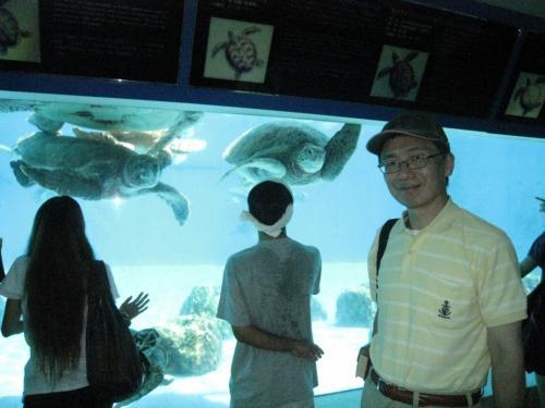 こちらはウミガメの水槽です。