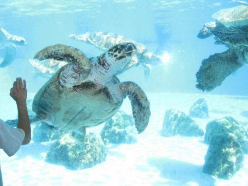 ウミガメの雄姿。