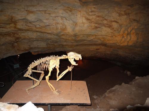 フクロライオンの化石が見つかった採掘場。<br /><br />フクロライオン:ティラコレオ (Thylacoleo) は新生代漸新世から更新世(約2400万 - 約5万年前) にかけてのオーストラリア大陸に生息していた有袋類の捕食者。カンガルー目 - ティラコレオ科に属する絶滅した属である。