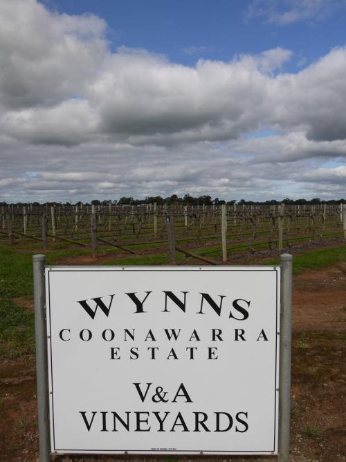 オーストラリアでも屈指のプレミアムワイン生産地、クーナワラワイナリー(Coonawara Winery)。マウントギャンビアからナラコート鍾乳洞国立公園へ行く途中、A66のハイウェイ沿いに出てきます。<br /><br />クーナワラワイナリー(Coonawara Winery)公式ページ:http://www.coonawarra.org/