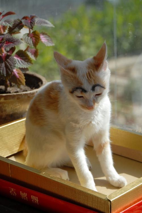 帰宅後、時間までにゃんこの「来福(らいふぅ)」と遊んでいましたが、窓際のホカホカ陽気でウトウト・・・<br /><br />早速眉毛を描かせて戴きました♪
