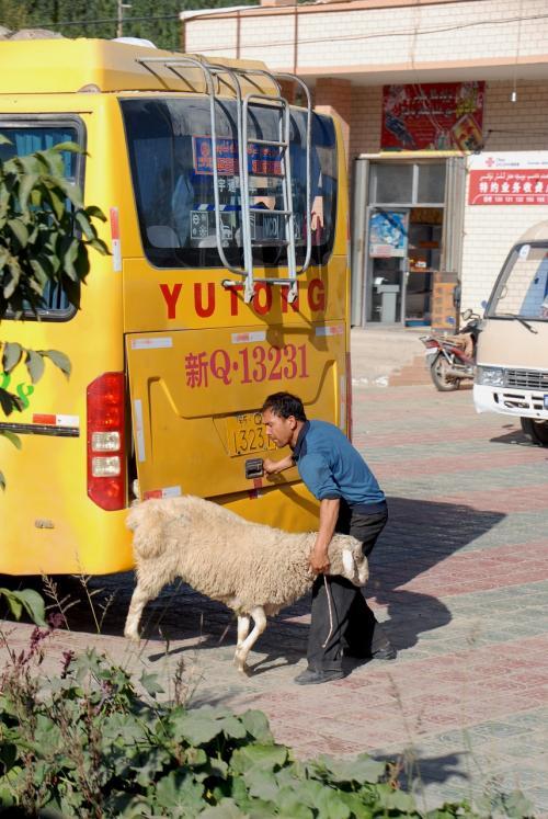 羊、バッゲージコンテナに積み込むんですね・・・(@灬@;<br />(このバスのエンジンは、ここではありません)