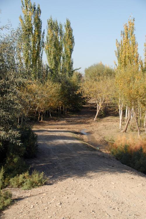 脇道。<br /><br />葉っぱが紅葉し始めていますね。<br />楊樹も先の方が黄色くなっているモノも見かけました。<br />10月後半頃、全ての楊樹並木のトンネルが、黄金のアーチに変わります。<br />そこまで滞在していたいのですが、残念ながら時間がありません。<br />(勿体ない・・・)