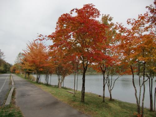 女神湖畔の紅葉の風景(写真)。夏は観光客も多く賑やかであるが、秋はひっそりとしている。