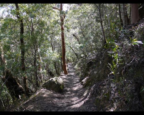 フェデラルパスも典型的な温帯雨林となります。