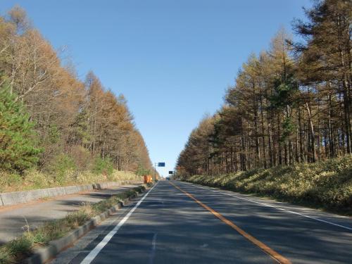 清里の森の周辺道路を通って佐久甲州街道(141号線)に下り、野辺山方面に車を走らせる。ここらのカラマツ林(写真)もいい。しかし、くすんだ茶色で黄金色にはほど遠い。