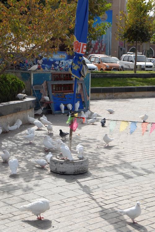 白い鳩が、イスラム教徒によって沢山飼われていました。<br /><br />