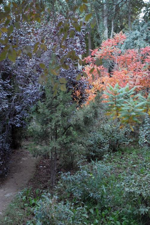 地形的に、ちょっと盛り上がった所がありました。<br /><br />何か、山の中で紅葉を見ている感じで素敵ですね。