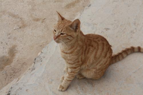 ヨルダンは猫が多い様に思いました。<br />死海のホテルのレストランにも何匹か来ていました。<br />ご飯をおねだりされたのであげたら、ちゃっかり膝にまでのってきてびっくり・・・でした。<br />
