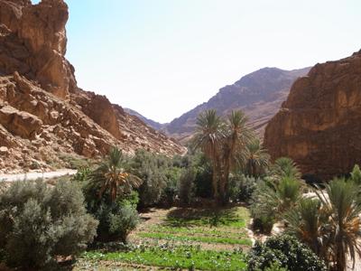 渓谷の近辺はオアシス。南モロッコはひたすらヤシとオリーブの光景が続きます。