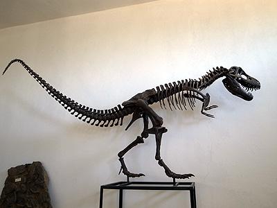 これはさすがに模型かな、と思うのですが、恐竜がいたJurassicperiod(ジュラ紀)の化石は結構出てくるみたいです。何しろ、4億年くらい前の古生代のアンモナイトとか、余裕で採れるらしいのです。