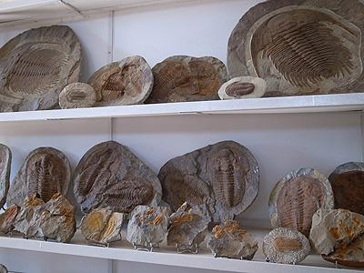 お土産コーナーに、こんな化石があります。飾って保存しておくまでもなく、あとからあとからどんどん採れるみたいです。