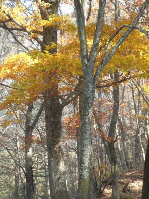 要害山頂上附近の紅葉