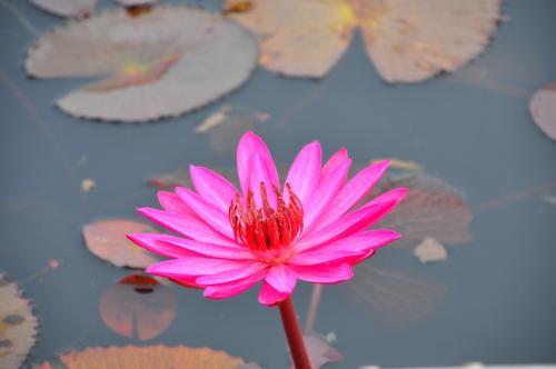 船で観光中、咲いている蓮の花を、持ち帰ることや、<br />湖にゴミを捨てることなどは、一切禁止されています。