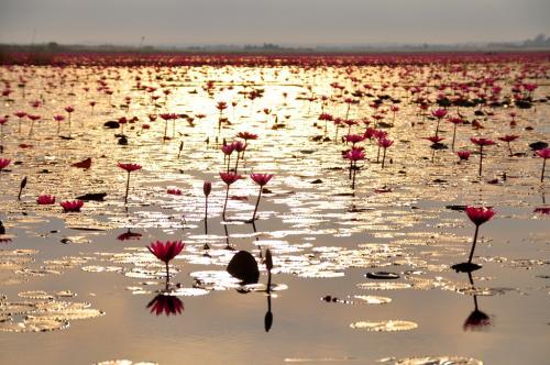 東側を見ると、朝日で、湖面が黄金色に輝いていました。