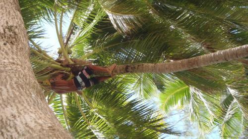 ヤシの木登りショーとか。<br />あっという間に登っちゃいました。