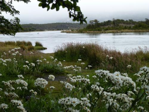 入江に注ぐ川沿いには短い夏の期間だけ咲く花畑が広がっていました