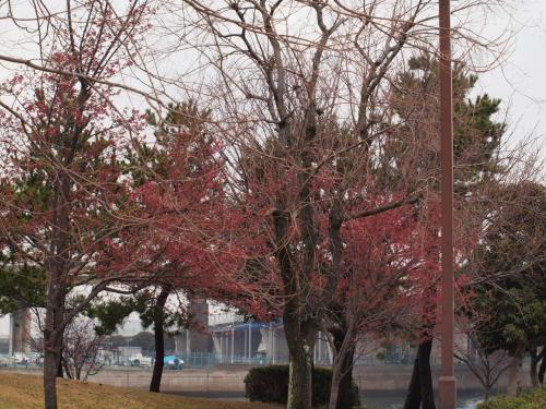 ただ、木の印象としては、赤くなり始めたところ。<br /><br /><br />