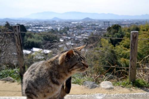 大和三山を背景に豪華な写真〜