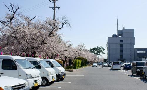 とりあえず市役所の受付で桜が植わっている所を聞き<br />裏口から出ると100m程度の桜トンネルがお出迎え<br /><br />ここは露天商が出るようです