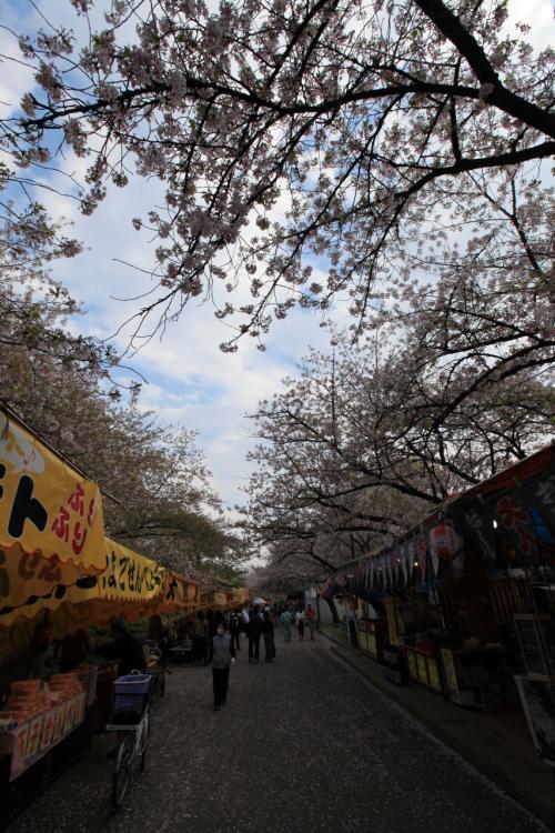 造幣局 桜の通り抜け 〜屋台へ行こう〜<br /><br />桜の通り抜けに咲いている桜は、ほとんどが遅咲きの八重桜なので、この屋台が並んでいるところに咲いている早咲きのソメイヨシノとは時期がズレています。<br /><br />今回は通り抜けの桜がだいたい5分咲きくらいだったので、こちらのソメイヨシノはピークを過ぎ散り際といったところ。<br /><br />それでも場所によってはまだ綺麗に眺められます。<br />