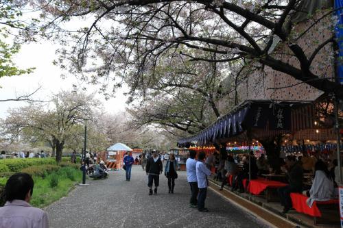 造幣局 桜の通り抜け 〜屋台へ行こう〜<br /><br />