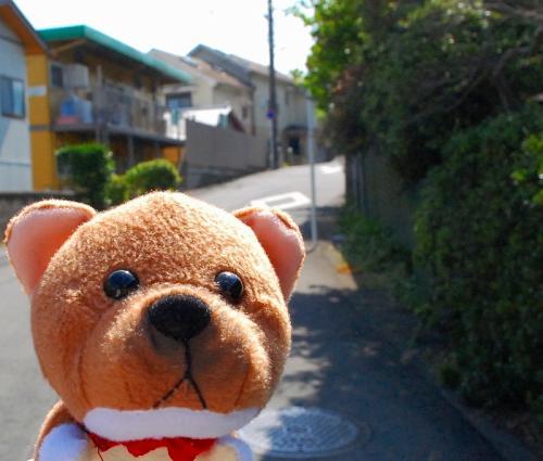 こんにちふ、柴右衛門です。<br />今日は、どこに行くのかな?<br />