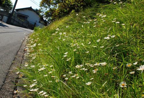 ♪野に咲く 花のように〜<br /><br />