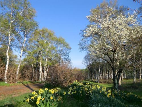 水仙(写真)がまだしっかり咲いている。ここには初夏にはレンゲツツジが咲く。<br />