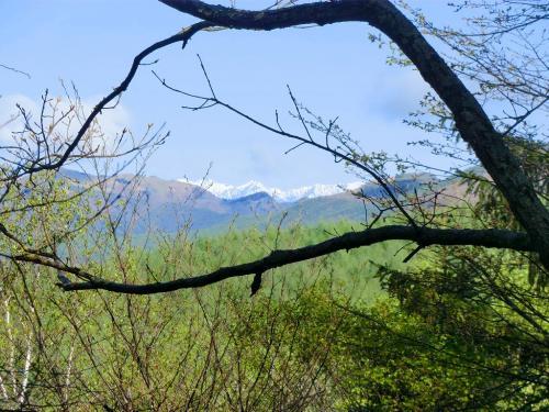 空気が澄んでいて遠くの北アルプス(写真)もしっかり見える。今回のコテージ滞在は天気に恵まれている。よって、忙しくなる。