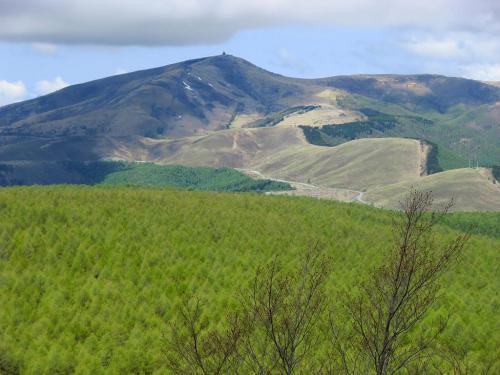 八子ケ峰山麓から一面にカラマツ林(写真)が広がり見事の一言。紅葉の時期は黄金に染まる。正面の山は標高1925mの車山。<br />