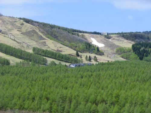 「しらかば2in1スキー場」のアップ(写真)。このカラマツ林の中に「御柱の道トレッキングコース」がある。秋になればカラマツの落ち葉を踏みしめて寂しく歩ける。<br /><br />