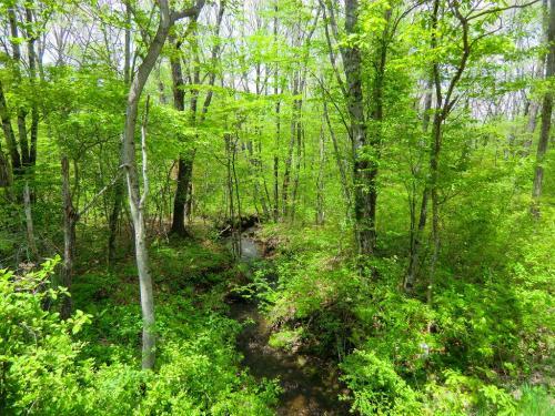 北軽井沢の中心から西に延びる県道235号線は森の中の道であり、どこでも素晴らしい新緑(写真)が味わえる。心細くなるような深い森の中を進むと突然「ホテル軽井沢1130」の横に出る。<br />